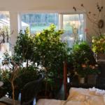 Hvordan har dine overvintrende planter det?