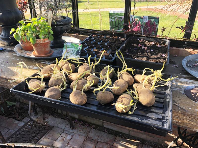 Sætkartofler