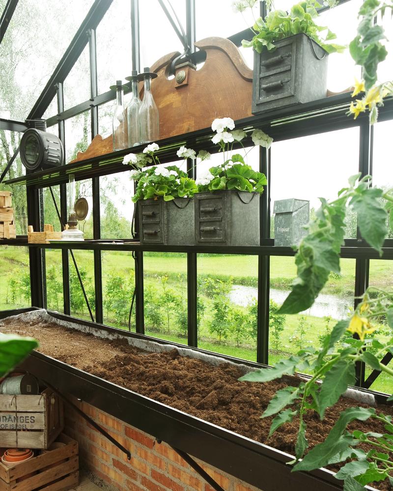 Hvad dyrker man i såbedet om sommeren?