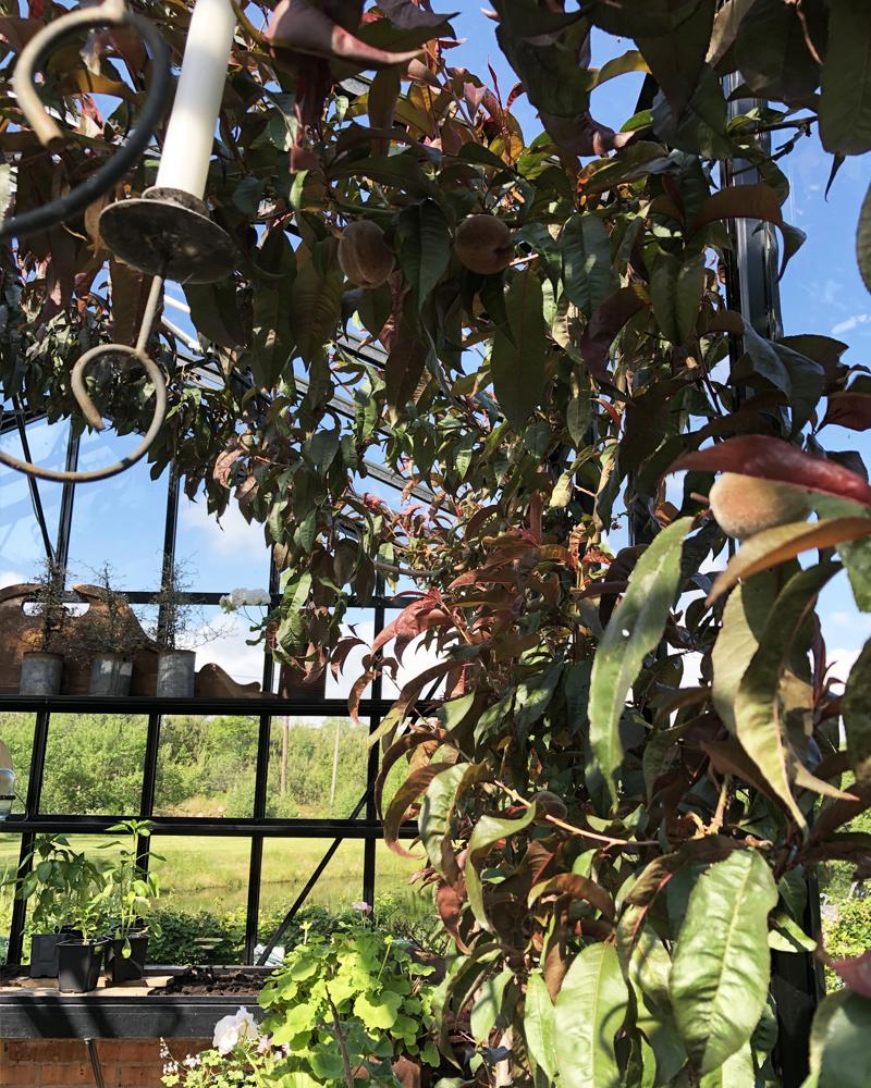 Skygge i drivhuset - plant et træ!