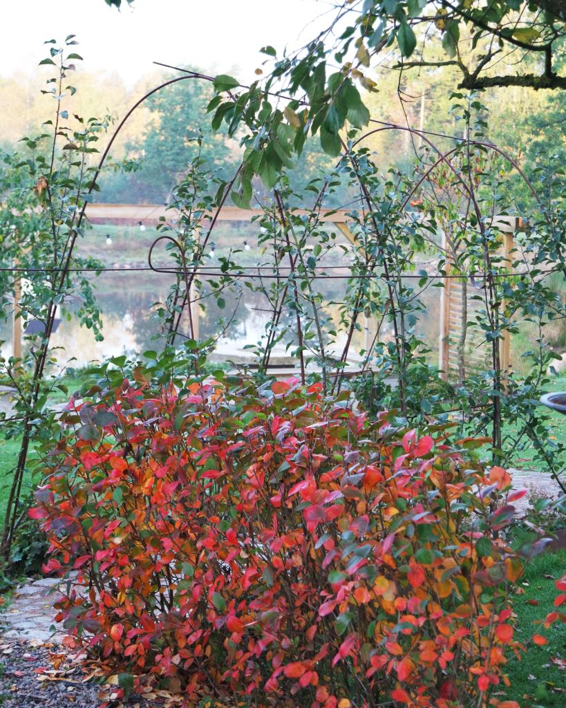 overvintre planter