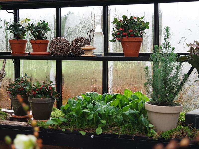 Hvad vokser der i køkkenhaven nu?