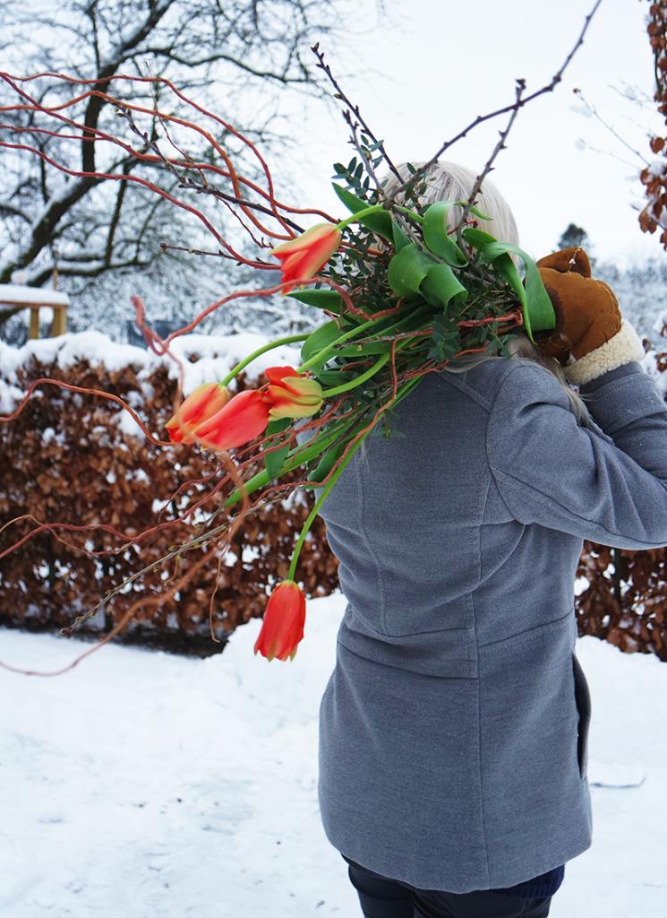 Tulipaner – en forårsbebuder