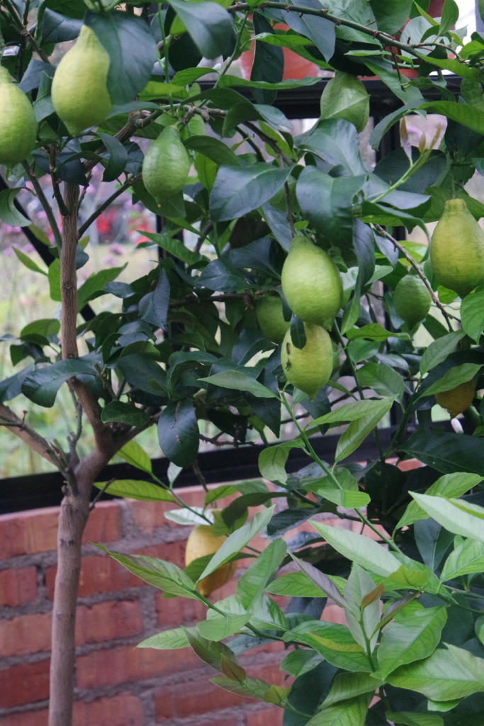 Vinteropbevar planter i drivhuset – Ventilator og isoleringstelt